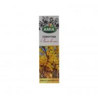Arbust ornamental Forsythia, Ploaie de aur, Amia 1839