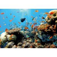 Fototapet duplex Coral reef 4-005 254 x 184 cm