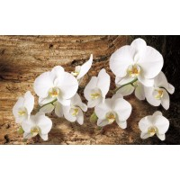 Fototapet duplex Orhidee 1017P8 368 x 254 cm