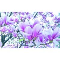 Fototapet duplex Magnolii 1619P8 368 x 254 cm