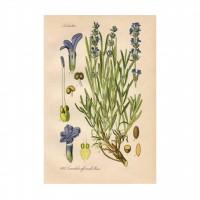 Tablou canvas PT1347, pe panza, cu rama, compozitie cu flori, 40 x 60 cm