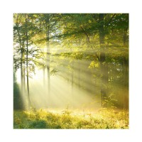 Tablou TA17-PFT005, peisaj, canvas, 40 x 40 cm