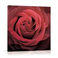 Tablou 03470, Trandafir roz, canvas, 60 x 60 cm