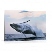 Tablou 031183, Balena, canvas, 60 x 90 cm