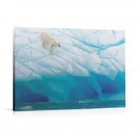 Tablou 03207, Urs polar, canvas, 60 x 90 cm