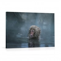 Tablou 03208, Maimuta in ploaie, canvas, 60 x 90 cm