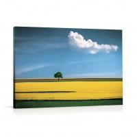 Tablou 03321, Camp inflorit, canvas,  03321, 60 x 90 cm
