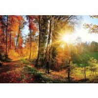 Fototapet hartie Forest 12108 VE-XXXL 416 x 254 cm