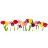 Panou decorativ bucatarie Splashback, compozit, luminescent, SPB 008, floral, 2600 x 750 x 3 mm