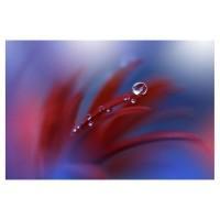 Tablou canvas Decor, flori, panza + sasiu, 60 x 90 cm