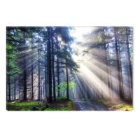 Tablou canvas dualview DTB7579, Startonight, Lumina in padure, panza + sasiu lemn, 60 x 90 cm