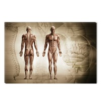 Tablou canvas dualview DTB7739, Startonight, Anatomie, panza + sasiu lemn, 60 x 90 cm