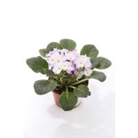 Planta interior Saintpaulia mix H 20 cm D 12 cm