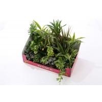Mix 24 plante verzi D 9 cm