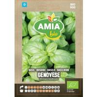 Seminte legume bio Amia, busuioc Genovese