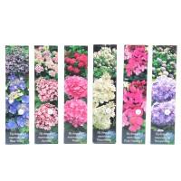 Arbust ornamental - Hortensia Hydrangea mix H 30 cm