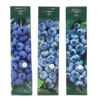 Arbust fructifer - afin Yurta, 30 cm