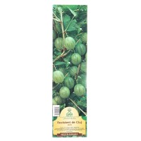 Arbusti fructiferi - agris Yurta