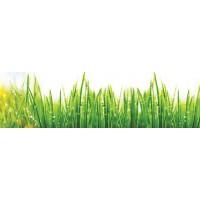 Panou decorativ bucatarie Splashback, compozit, luminescent, SPB 027, iarba, 1100 x 650 x 3 mm