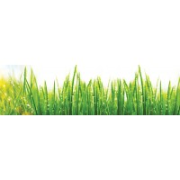 Panou decorativ bucatarie Splashback, compozit, luminescent, SPB 027, iarba, 750 x 600 x 3 mm