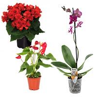 Plante decorative prin flori