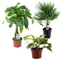 Plante decorative prin frunze