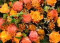 Pregatirea trandafirilor pentru iarna