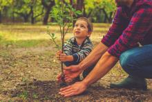 Plantarea pomilor fructiferi toamna