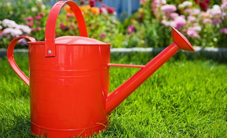 Ghid de cumparare produse intretinere plante