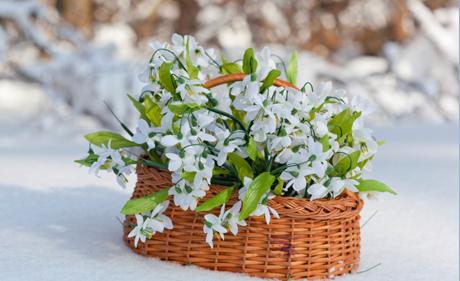 Cum protejam plantele pe timp de iarna